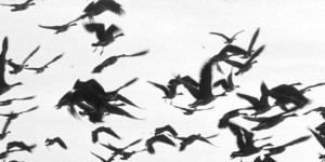 birdsofa-feather